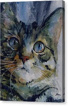 Mystery Tabby Canvas Print by Paul Lovering