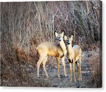 Mystic Duo Canvas Print by Marty Koch