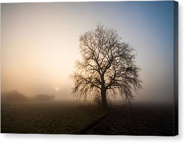 Mystic Morning Canvas Print by Davorin Mance