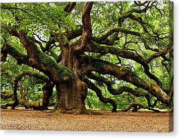 Mystical Angel Oak Tree Canvas Print by Louis Dallara