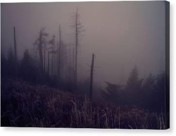 Mystical Morning Fog Canvas Print by Dan Sproul