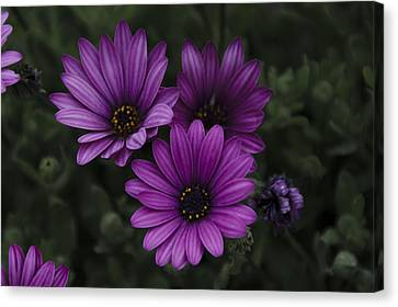 Mystical Purple Canvas Print by Penny Lisowski