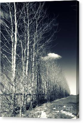 Naked Trees Canvas Print by Stelios Kleanthous