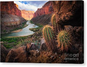 Colorado River Canvas Print featuring the photograph Nankoweap Cactus by Inge Johnsson