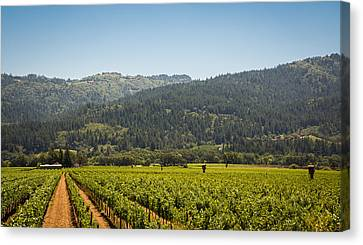 Napa Canvas Print by Clay Townsend