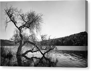 Napa Lake Canvas Print by Francesco Emanuele Carucci