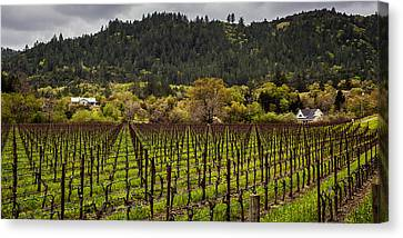 Napa Vineyard Spring Canvas Print by John Crowe