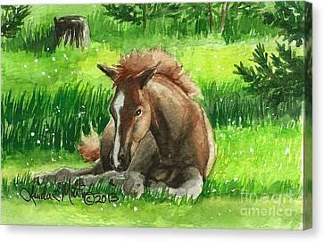 Napping Alberta Wild Foal Canvas Print by Linda L Martin