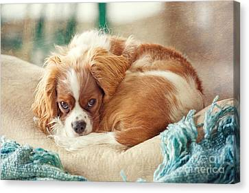 Napping Puppy Canvas Print by Kay Pickens