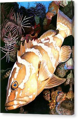 Nassau Grouper Canvas Print by Karen Rhodes