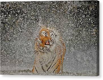 Nat Geo Recognition A?? The Explosion Canvas Print by Ashley Vincent