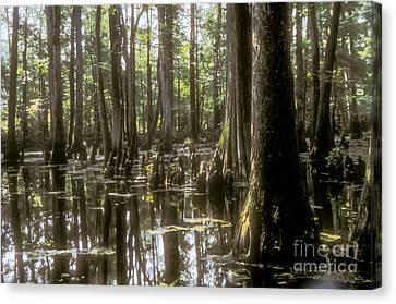 Natchez Trace Wetlands Canvas Print by Bob Phillips