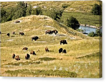 National Bison Range Moiese Mt Canvas Print by Christine Till