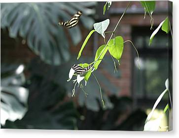 National Zoo - Butterfly - 12123 Canvas Print by DC Photographer