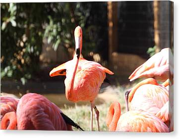 National Zoo - Flamingo - 01133 Canvas Print by DC Photographer