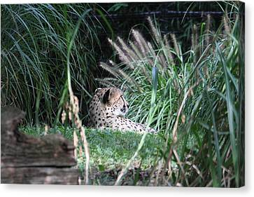 National Zoo - Leopard - 01132 Canvas Print by DC Photographer