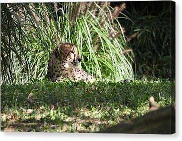 National Zoo - Leopard - 01133 Canvas Print by DC Photographer