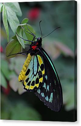 Natural Awakenings Canvas Print by Juergen Roth