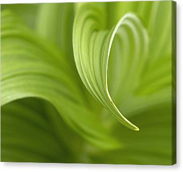 Natural Green Curves Canvas Print by Claudio Bacinello