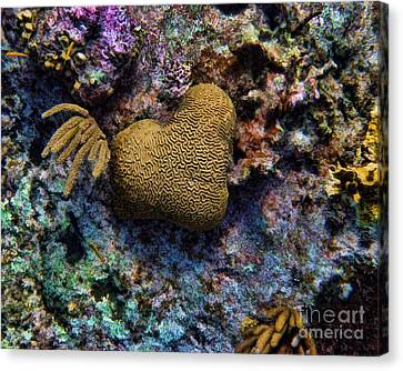 Natural Heart Canvas Print by Peggy Hughes
