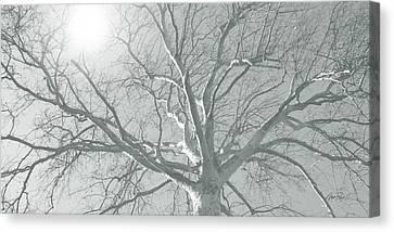 nature - art - Winter Sun  Canvas Print by Ann Powell