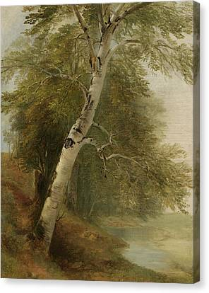 Nature Study   A Birch Tree Canvas Print by Asher Brown Durand