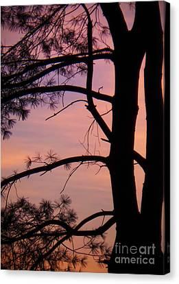 Nature Sunrise Canvas Print by Charlie Cliques