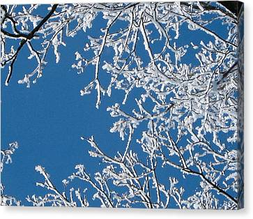 Nature's Art Canvas Print by Denise Mazzocco