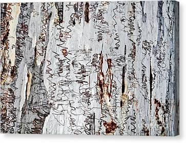 Nature's Art - The Scribbly Gum Canvas Print by Kaye Menner