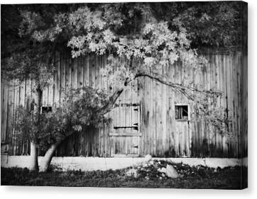 Natures Awning Bw Canvas Print by Julie Hamilton