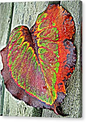 Nature's Glory Canvas Print by Barbara McDevitt