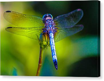 Natures Jewels Canvas Print by Lesley Brindley