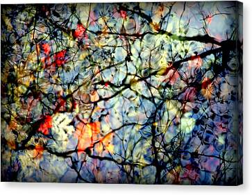 Natures Stained Glass Canvas Print by Karen Wiles