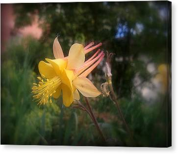 Natures Star Canvas Print by Heather L Wright
