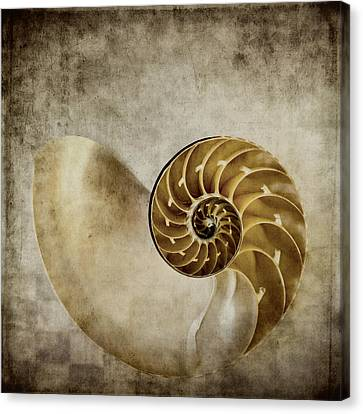 Nautilus Shell Canvas Print by Carol Leigh