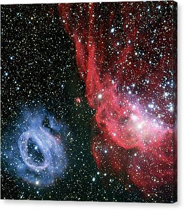 Nebulae Ngc 2020 And Ngc 2014 Canvas Print by European Southern Observatory