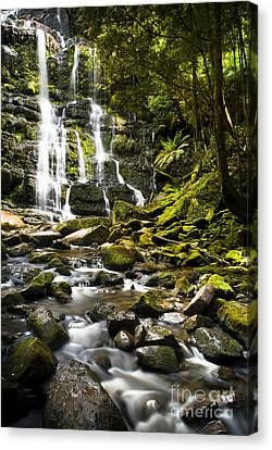 Nelson Falls Tasmania Canvas Print by Tim Hester