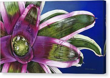 Neoregelia Terrie Bert Canvas Print by Urszula Dudek
