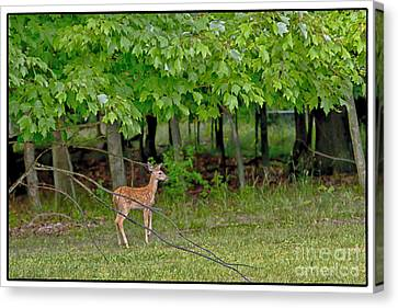 New Beginnings Canvas Print by Timothy J Berndt