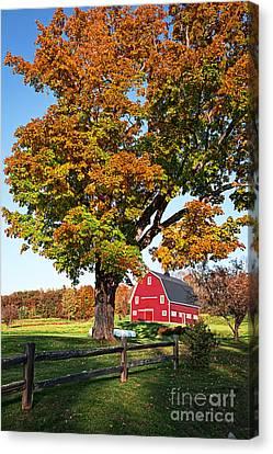 New England Farm Fall Foliage Canvas Print by Edward Fielding