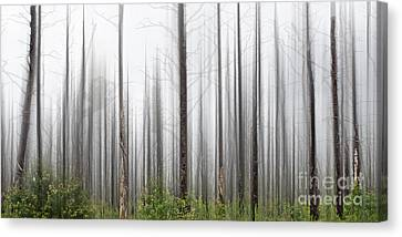 New Jersey Pine Barrens Canvas Print by Tom Gari Gallery-Three-Photography