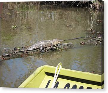 New Orleans - Swamp Boat Ride - 1212160 Canvas Print by DC Photographer