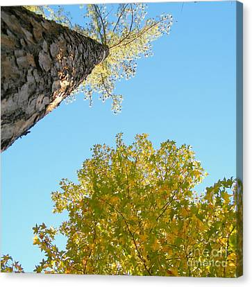 New Perspective On Autumn Leaves Canvas Print by Cheryl Hardt Art
