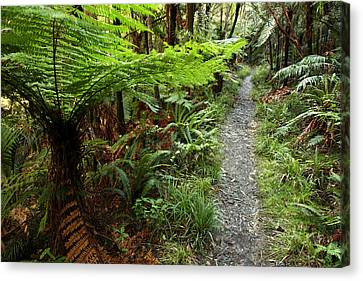 New Zealand Forest Canvas Print by Les Cunliffe