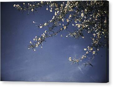 Next Time I'll Be Sweeter Canvas Print by Laurie Search