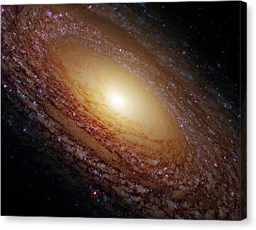 Ngc 2841 Canvas Print by Ricky Barnard
