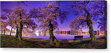 Night Blossoms 2014 Canvas Print by Metro DC Photography