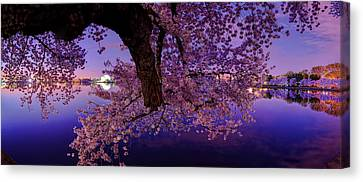 Night Blossoms Canvas Print by Metro DC Photography