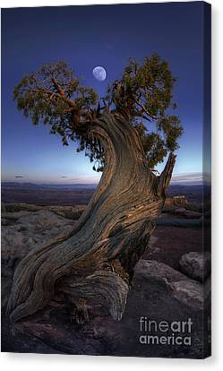 Night Guardian Of The Valley Canvas Print by Marco Crupi