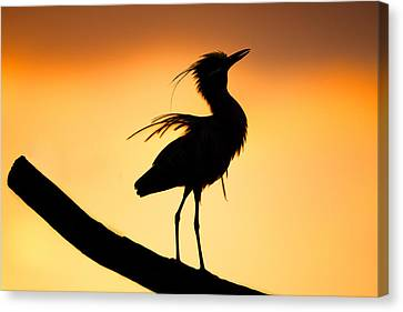 Night Heron Silhouette 2 Canvas Print by Andres Leon